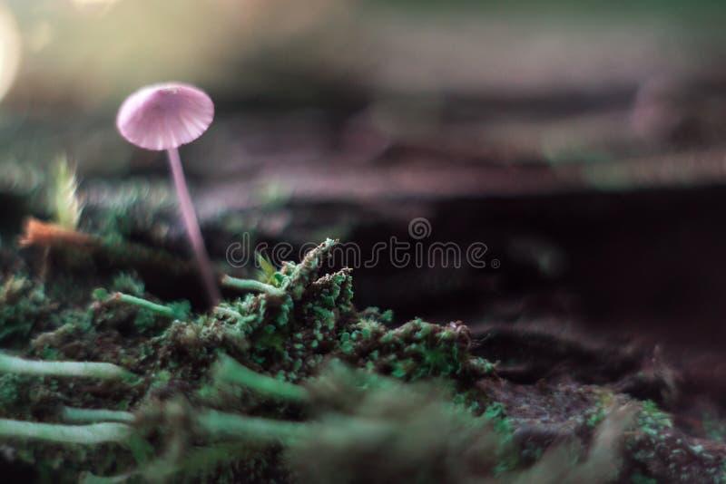 Kleine paddestoel op een stompmacro in het bos royalty-vrije stock fotografie