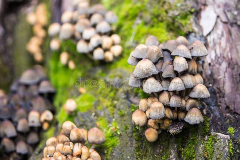 Kleine Paddestoelen van Verschillende Kleuren op Bemoste Boomstomp stock afbeeldingen