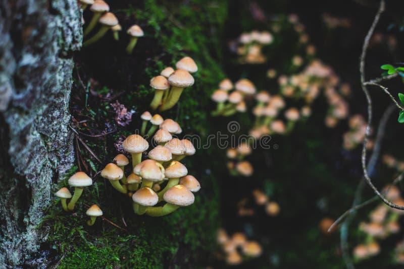 Kleine paddestoelenfamilie op boomlogboek en mos in het bos royalty-vrije stock afbeelding