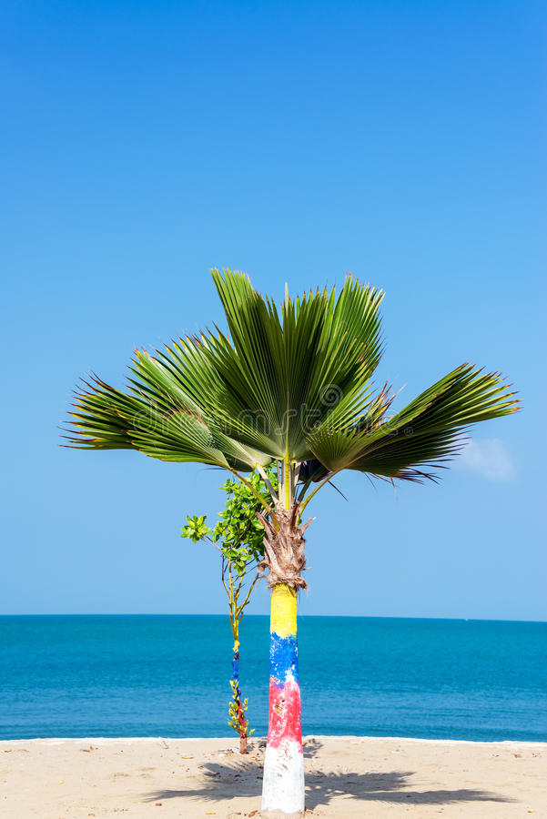 Kleine Palm royalty-vrije stock afbeelding