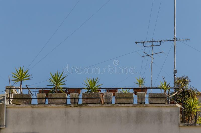 kleine palmen op het balkon stock foto