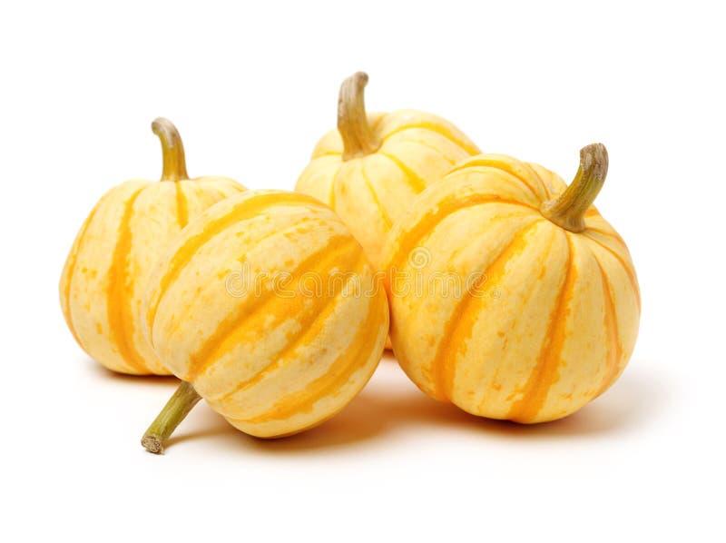 Kleine perfecte vorm geribbelde pompoen met oranje strepen voor Halloween-decoratie stock afbeeldingen