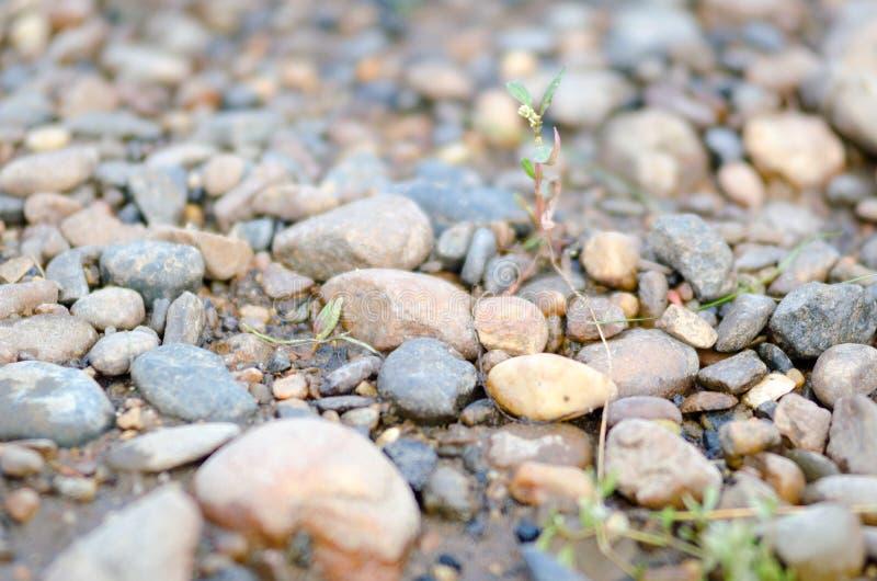 Kleine Pflanzen durchqueren die Felsen am Boden stockfotografie