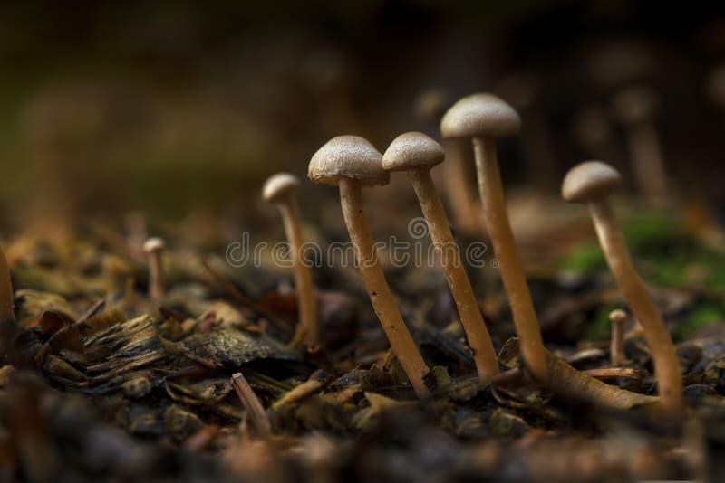 Kleine Pilze im Herbstwald, Abschluss oben mit Kopienraum stockfotografie
