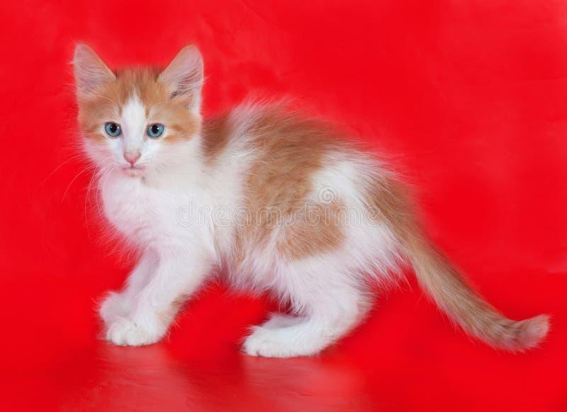 Kleine pluizige gember en wit katje die zich op rood bevinden stock foto