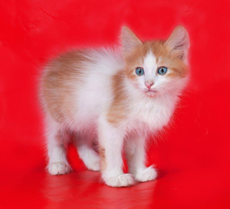 Kleine pluizige gember en wit katje die zich op rood bevinden stock afbeelding