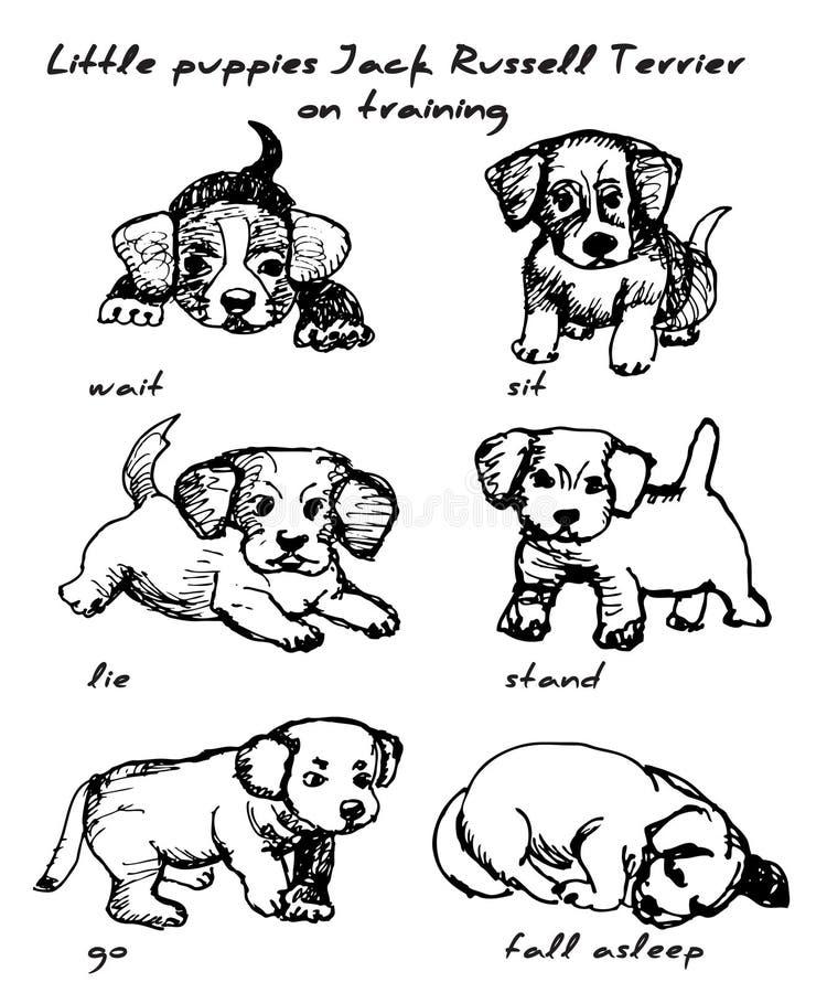 Kleine puppies jack russell doodsbang op training, vector, illustratie, isolatie vector illustratie