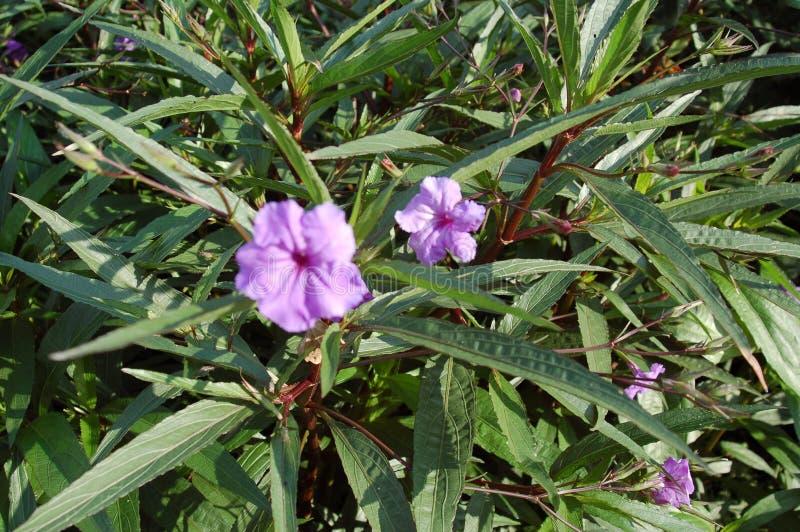 Kleine purpurrote Blumen in den Blättern von langen Blättern lizenzfreie stockbilder