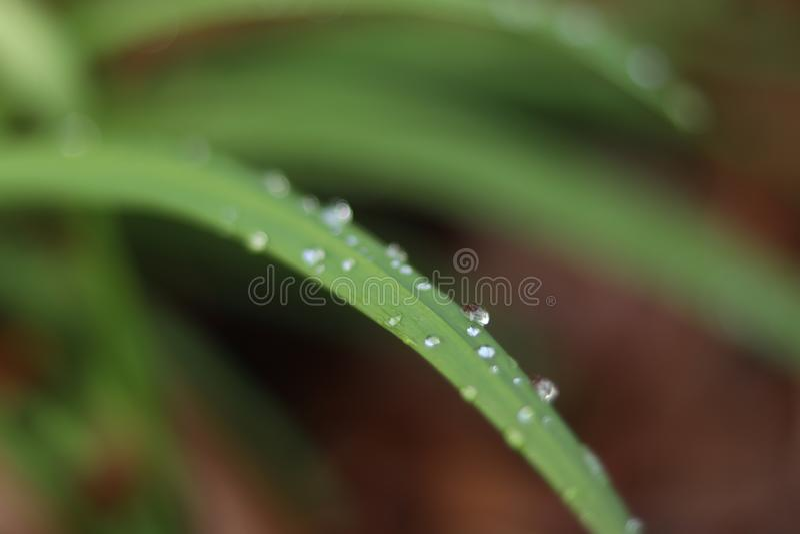 Kleine Regentropfen auf Betriebsblatt stockfotos