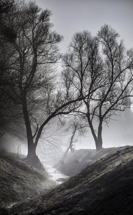 Kleine rivier in de mist stock afbeeldingen
