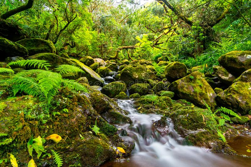 Kleine rivier die zijn manier maken door rotsen en het groene hout van Madera, Portugal royalty-vrije stock afbeelding