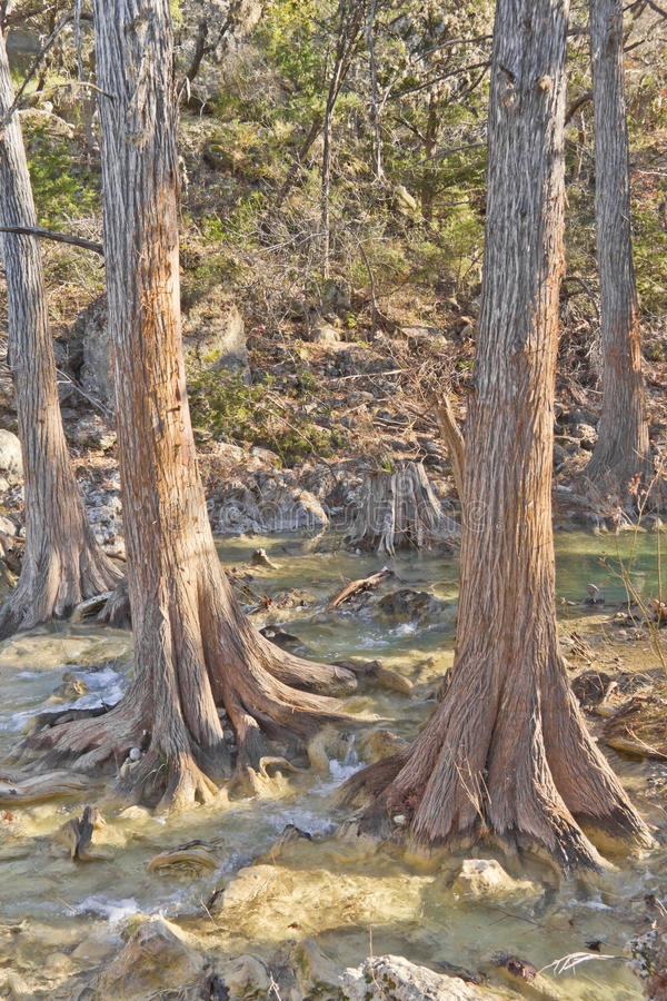Kleine rivier in Hamilton Pool royalty-vrije stock afbeeldingen