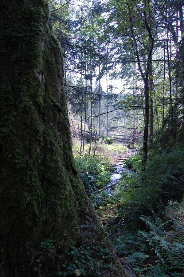 Kleine rivier in Karpatische berg stock fotografie