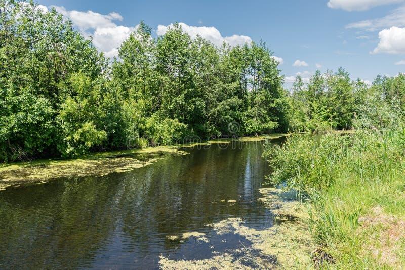 Kleine rivier in walley stock afbeelding