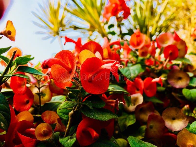 Kleine rode bloem stock afbeelding