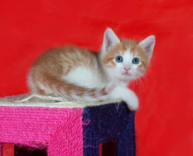Kleine rode en witte katjeszitting bij het krassen van post op rood stock fotografie