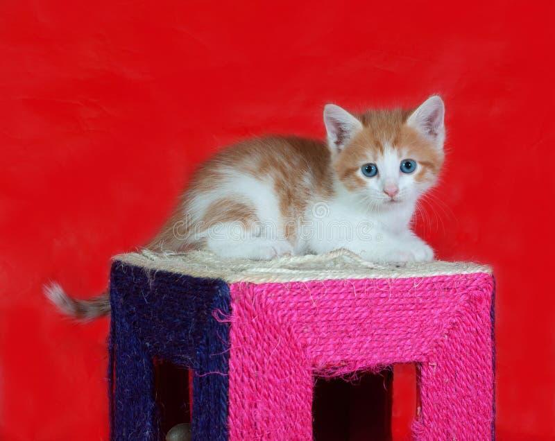 Kleine rode en witte katjeszitting bij het krassen van post op rood stock afbeelding