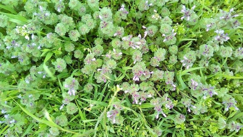 Kleine rosa Blumen im grünen jungen Gras auf einem dunklen Hintergrund lizenzfreie stockfotos