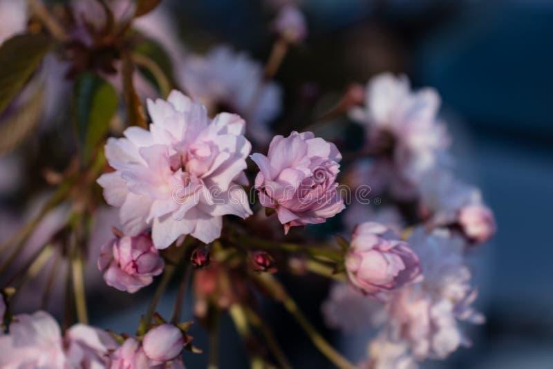 Kleine rosafarbene Blumen stockbild