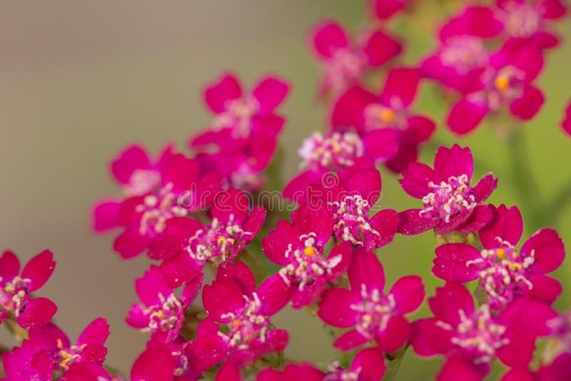 Kleine rote Blumen lizenzfreies stockfoto