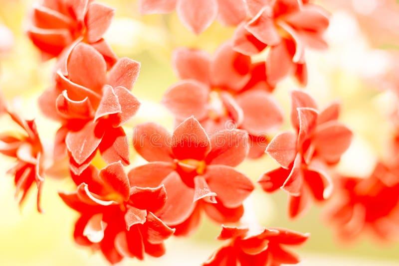 kleine rote Blumen, Natur lizenzfreies stockfoto