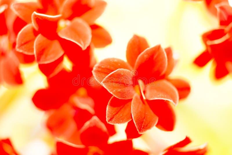 kleine rote Blumen, Natur stockbilder
