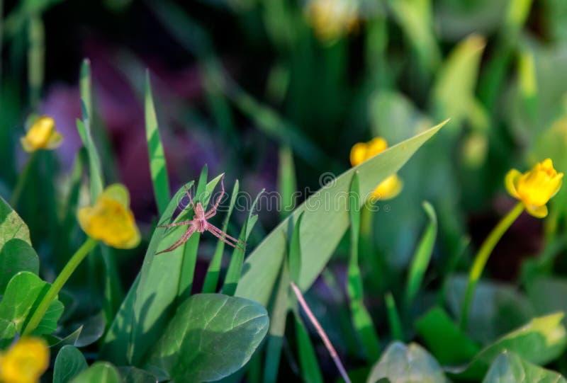 Download Kleine rote Spinne stockbild. Bild von insekt, tageslicht - 90227631