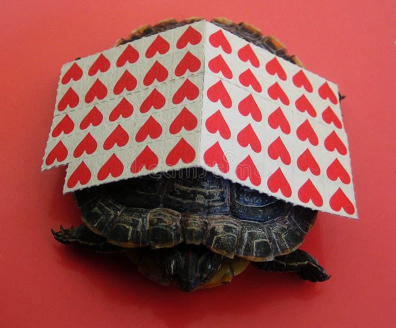 Kleine rote Stockpapiere mit klein Gedruckten einer Schildkrötenhintergrundmakrotapete lizenzfreie stockfotografie