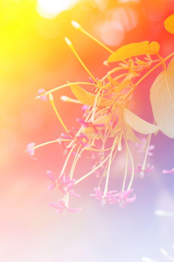 Kleine roze bloem stock afbeelding