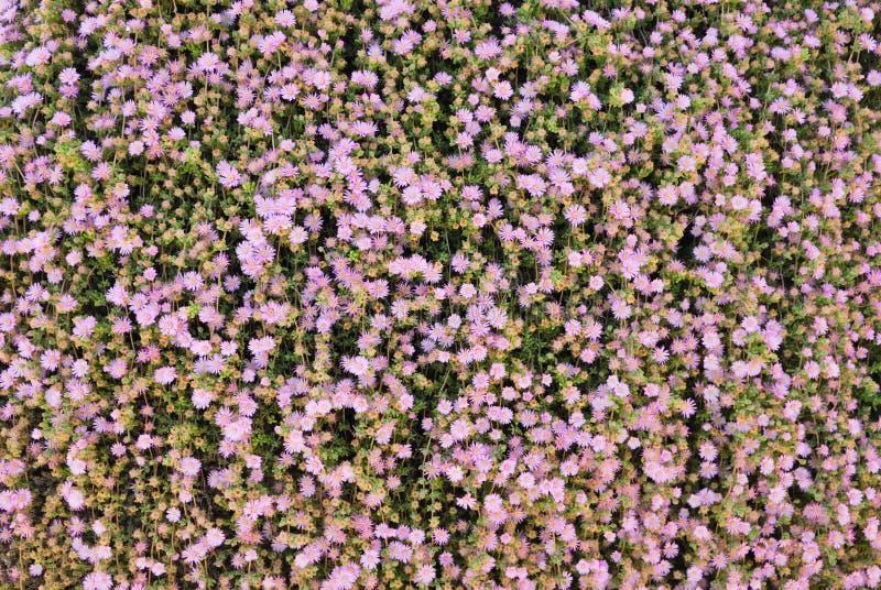 Kleine roze bloemen stock foto