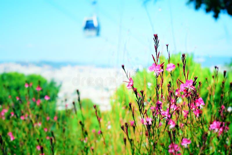 Kleine roze bloemen in een tuin royalty-vrije stock foto