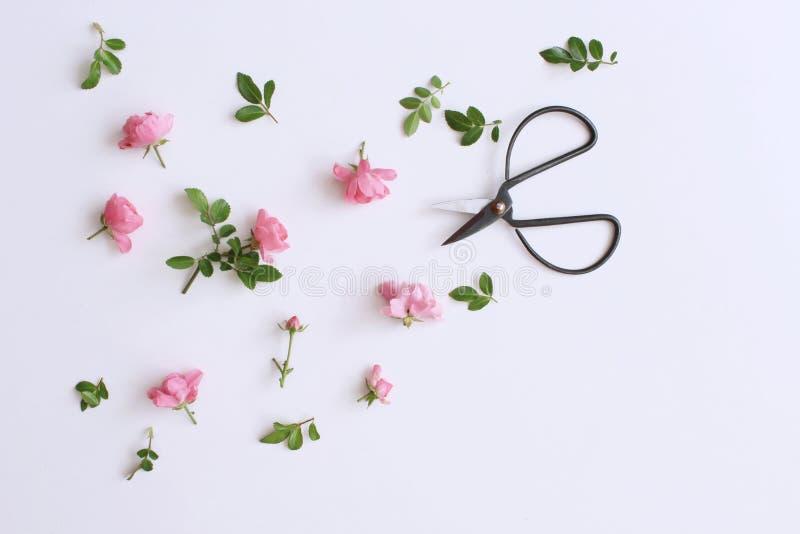 Kleine roze rozen op witte houten lijst Zachte romantische achtergrond Bloemen achtergrond De hoogste vlakke mening, legt Bloemen stock foto's