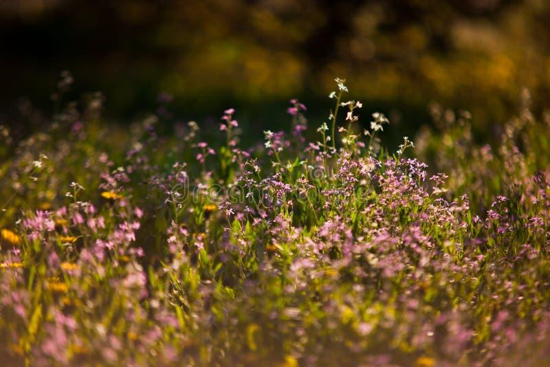 Kleine roze wildflowers royalty-vrije stock foto's