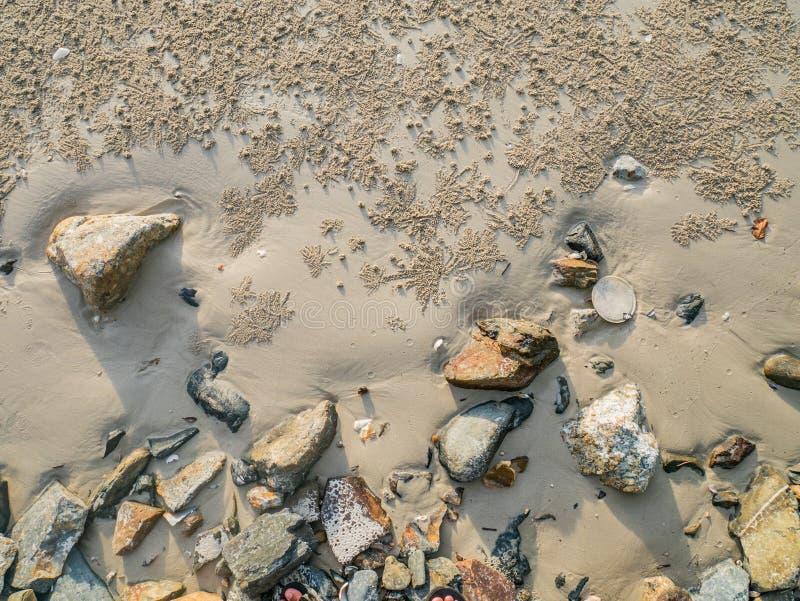 Kleine Sand-Bälle, Sandkrabbe, die Löcher im Sand beac gräbt stockbild