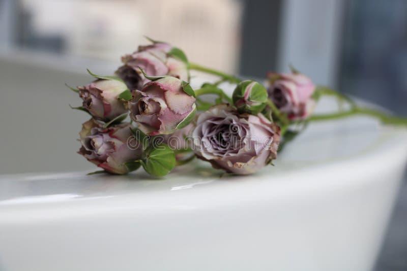 Kleine schmutzige Rosen auf einem Bad lizenzfreie stockbilder