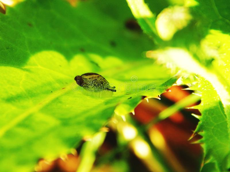 Kleine Schnecke auf grünem Blatt lizenzfreie stockbilder