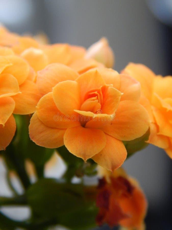 Kleine schoonheid stock foto's