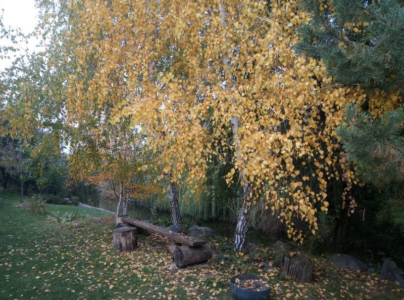 Kleine Schritte des Herbstes lizenzfreies stockbild