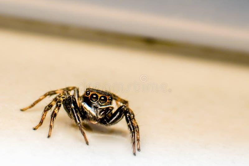 Kleine schwarze Spinne lizenzfreie stockfotografie