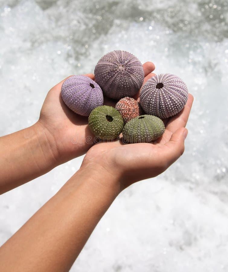 Kleine shells in handen stock afbeelding