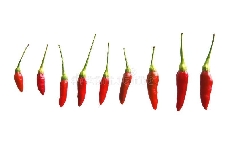 Kleine Spaanse peperspeper stock foto's