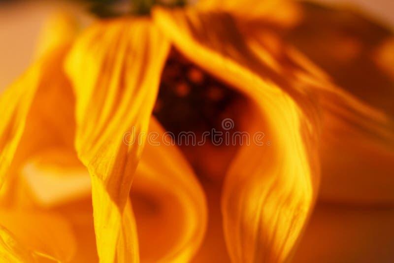 Download Kleine Spezies der Blume stockbild. Bild von leben, gelb - 96927703