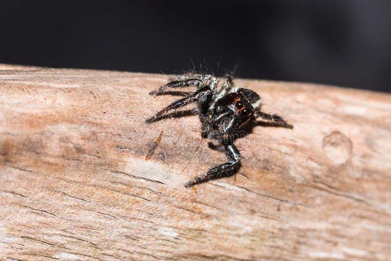 Kleine Spinne stockfoto