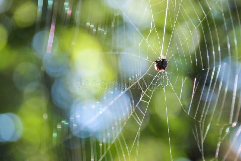 Kleine Spinne auf Netz lizenzfreie stockbilder