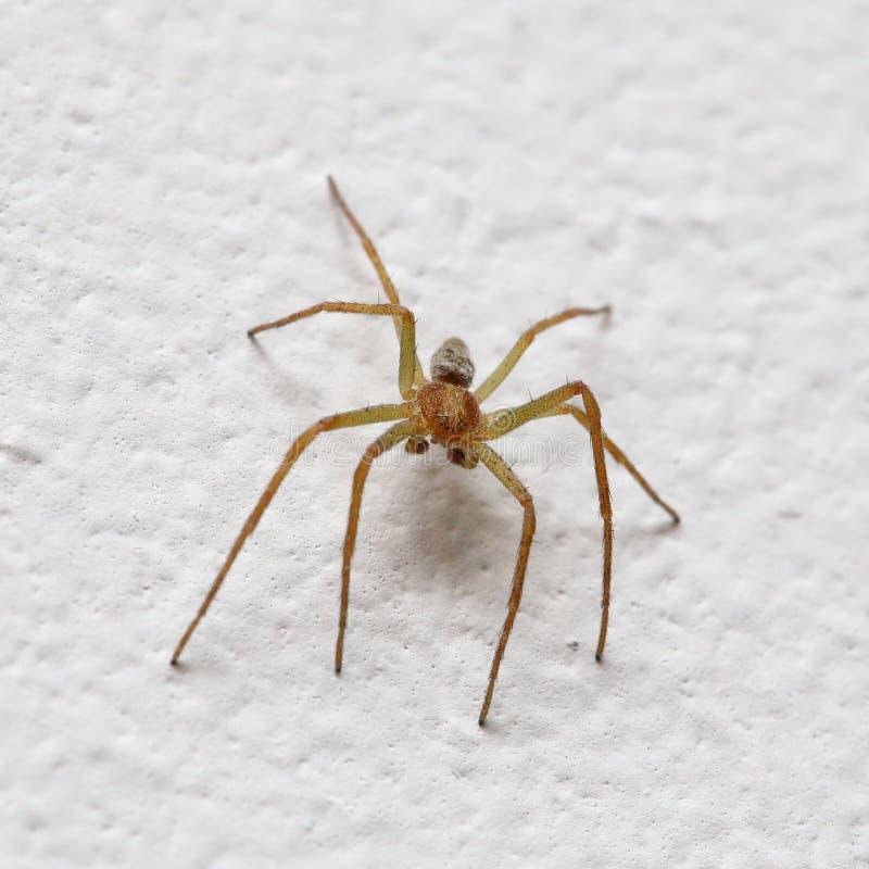Kleine Spinne auf Wand stockfotos