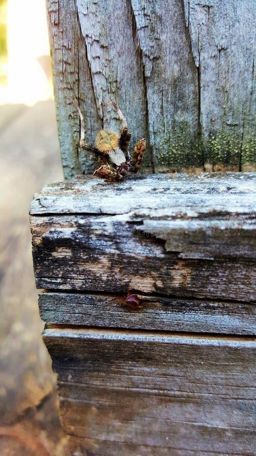 Kleine spinzitting op een hout stock fotografie