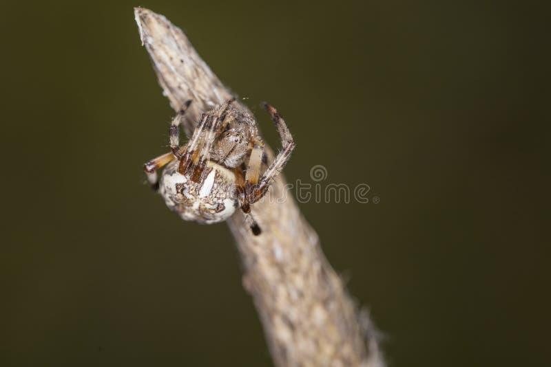 Kleine spinzitting op het eind van een stok royalty-vrije stock fotografie