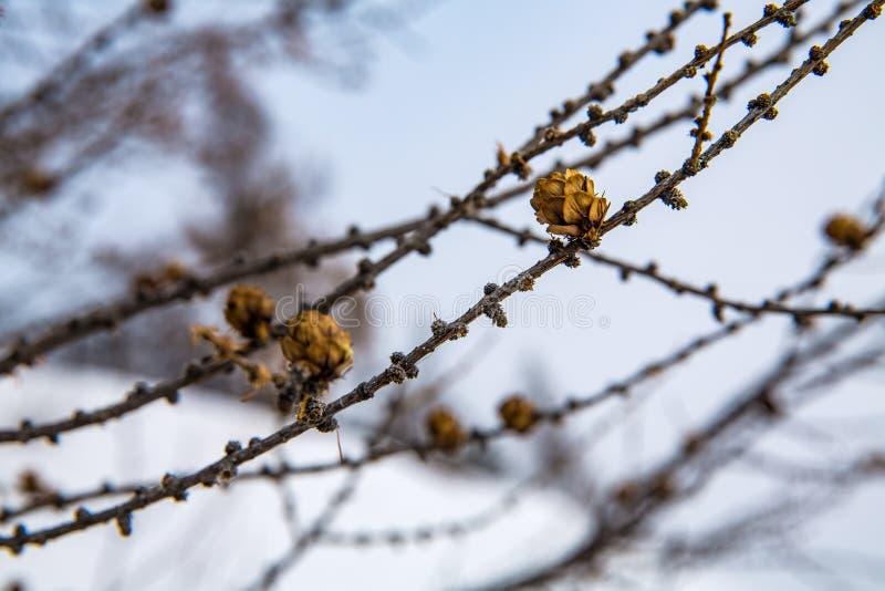 Kleine Stöße auf einer Niederlassung im Winter lizenzfreies stockfoto