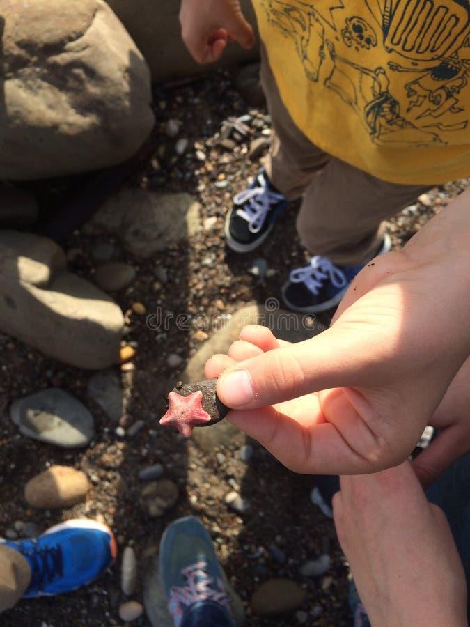 Kleine Starfish in der Hand stockbild