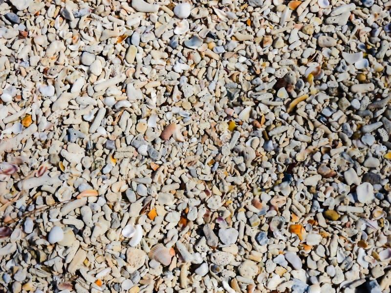 Kleine stenen en shell fragmenten royalty-vrije stock foto